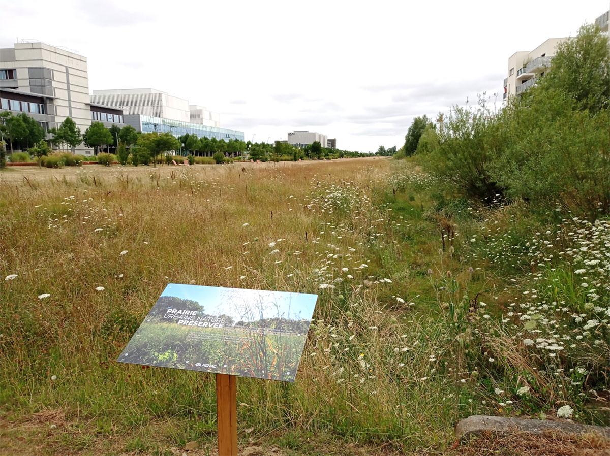 prairie-urbaine-blagnac