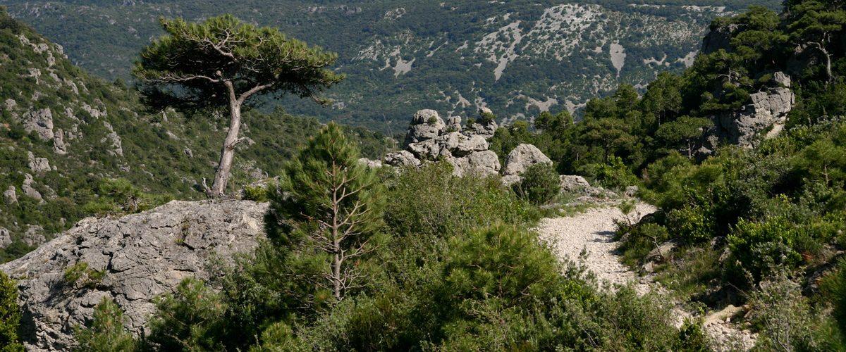Cap-du-Ginestet-c-Andrieu-Frédéric